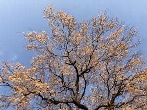 広葉樹の薪ストーブ燃料