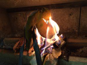 みかんの皮を着火剤で焚き付け